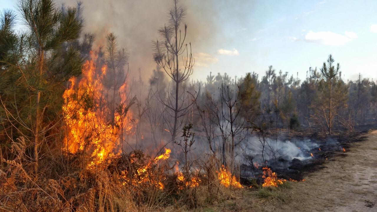 Ostrzeżenie o zagrożeniu pożarowym w lasach
