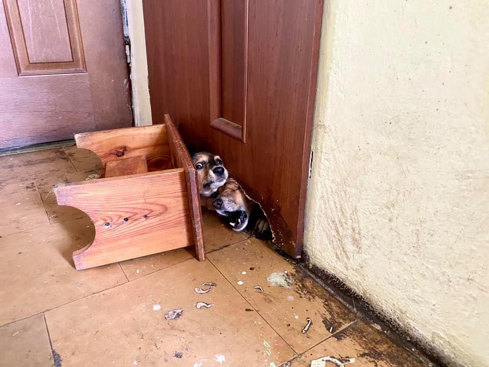 Gehenna psów pod Świdnicą [FOTO]